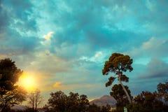 一棵杉树的剪影反对日落天空的 免版税图库摄影