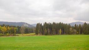 一棵杉树的行在大草原的 库存图片