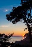 一棵杉树,渠道海在背景中,布里坦尼,法国的剪影在日落的 免版税库存照片