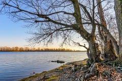 一棵柳树的看法接近第聂伯河的在基辅 免版税库存图片