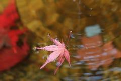 从一棵树下落的叶子在水中 库存照片