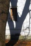 一棵树和一个树阴影在白色墙壁上 免版税库存照片