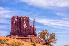 一棵树和一座小山在纪念碑谷 库存照片