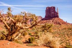 一棵树和一座小山在纪念碑谷 免版税库存图片