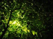 一棵树和一盏灯 免版税库存图片