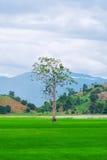 一棵树和完善的草地 免版税图库摄影