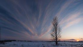 一棵树和日落在冬天 库存图片