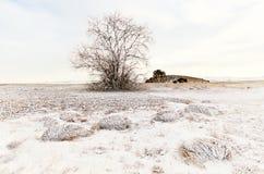 一棵树和草在冬天雪原与小山 免版税库存图片