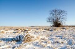 一棵树和草在冬天雪原与小山 免版税图库摄影