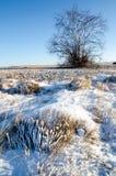 一棵树和草在冬天雪原与小山 图库摄影