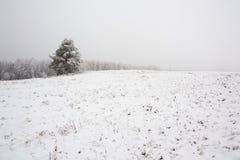 一棵树在冬天,有雾的领域 库存照片