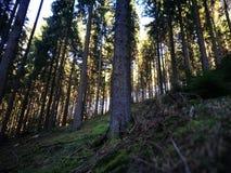 一棵树在夏天 库存图片