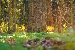 一棵树在春天绿色森林由晴朗的早晨光点燃了 图库摄影