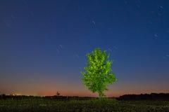 一棵树在晚上 图库摄影