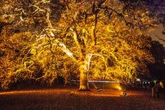 一棵树在晚上 库存图片
