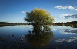 一棵树在湖 库存图片