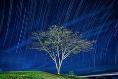 一棵树在眺望的背景中 E 抽象例证闪电夜空 在夜空的星形 免版税图库摄影
