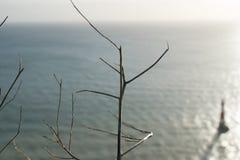 一棵树在秋天 背景的灯塔 免版税库存图片