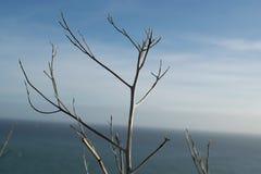 一棵树在秋天 免版税库存照片