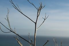一棵树在秋天 库存照片