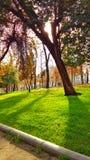 一棵树在秋天 免版税图库摄影