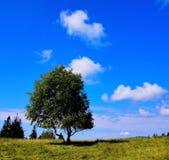 一棵树在草甸 免版税库存图片