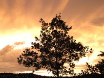 一棵树在阴沉的天空和日落下 库存图片