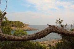 一棵树在马略卡Cala Mondrago 免版税图库摄影