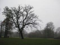 一棵树在Vondelpark,阿姆斯特丹 免版税库存照片