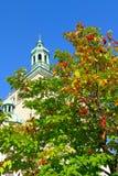 一棵树用反对大厦的红色莓果 免版税库存图片