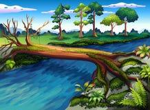 与海藻的一棵树在河 库存照片