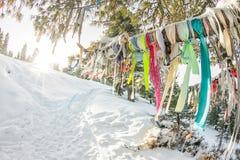 一棵树的分支与一个佛教礼拜式的被栓的丝带的 免版税库存照片