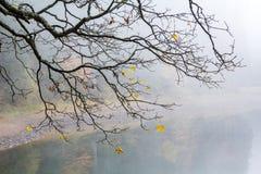 一棵树的分支与飞行的黄色的在雾离开 库存图片