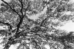 一棵树的分支反对天空的 库存图片