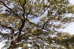 一棵树的分支反对天空的 库存照片