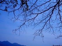 一棵树的分支在日落的 免版税库存照片