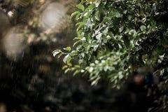 一棵树的分支在雨中 库存图片