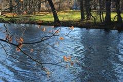 一棵树的分支没有叶子的在水上 库存照片