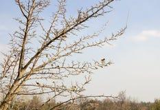 一棵树的分支没有叶子的 库存照片