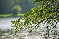 一棵树的分支以湖水为背景的 库存照片