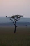 一棵树的剪影与两只鸟的 免版税库存图片