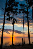 一棵树的剪影反对日落背景的  免版税库存图片