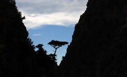 一棵树的剪影在日落的在两座山之间 库存照片