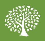 一棵树的剪影在绿色背景的 库存照片