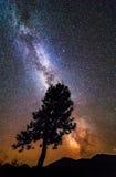 一棵树的剪影的夜风景在小山的上面的 库存照片