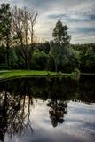 一棵树的反射在一个湖的Haagse猜错的, Hagu的森林 库存图片