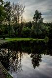 一棵树的反射在一个湖的Haagse猜错的, Hagu的森林 免版税库存照片