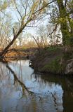 一棵树的反射在水中在海狸水坝附近 库存图片