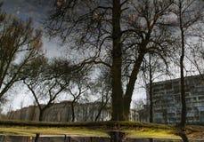 一棵树的反射在水中 免版税库存照片