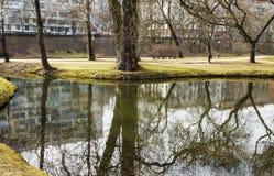 一棵树的反射在水中 库存照片